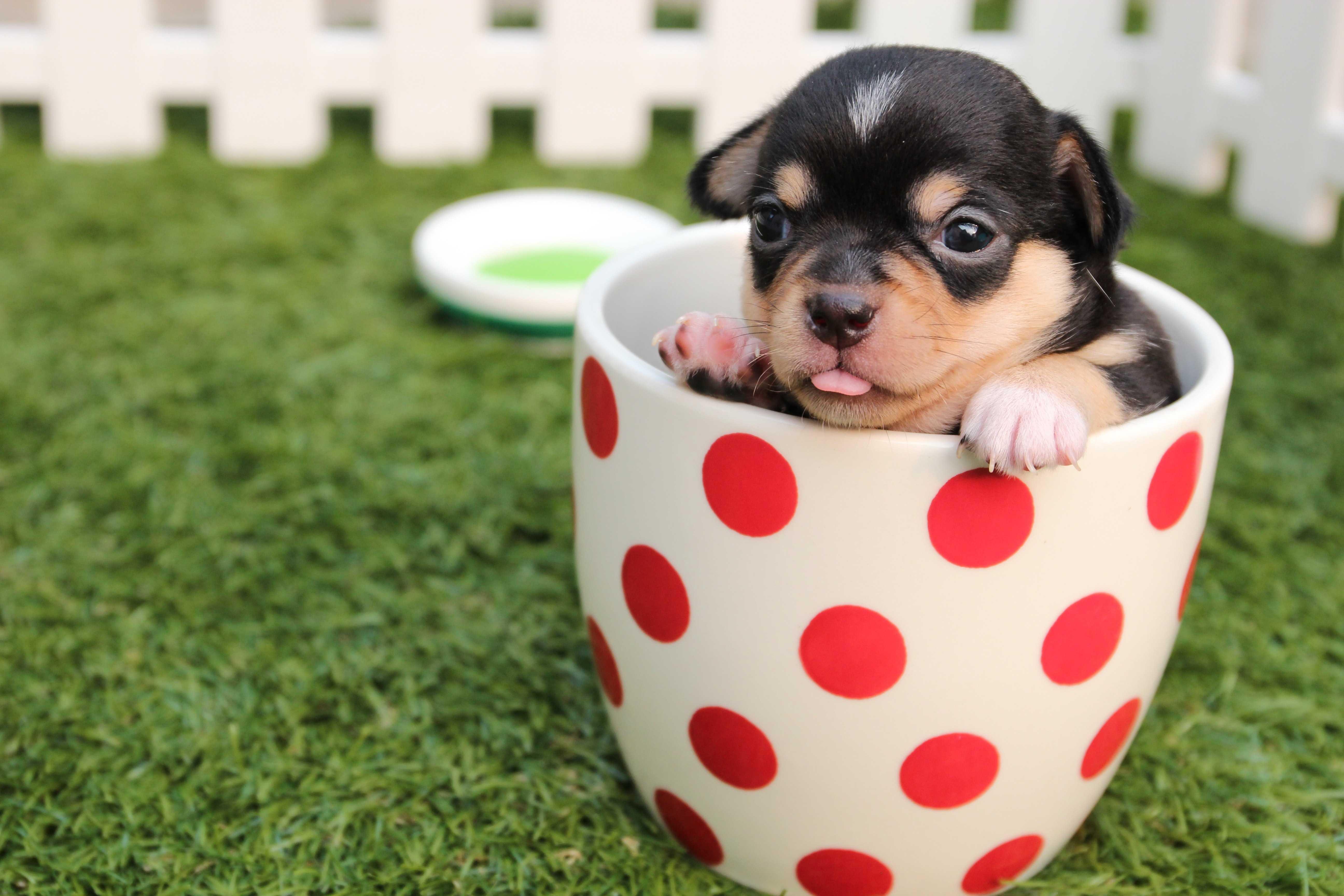 カップに入った犬の画像